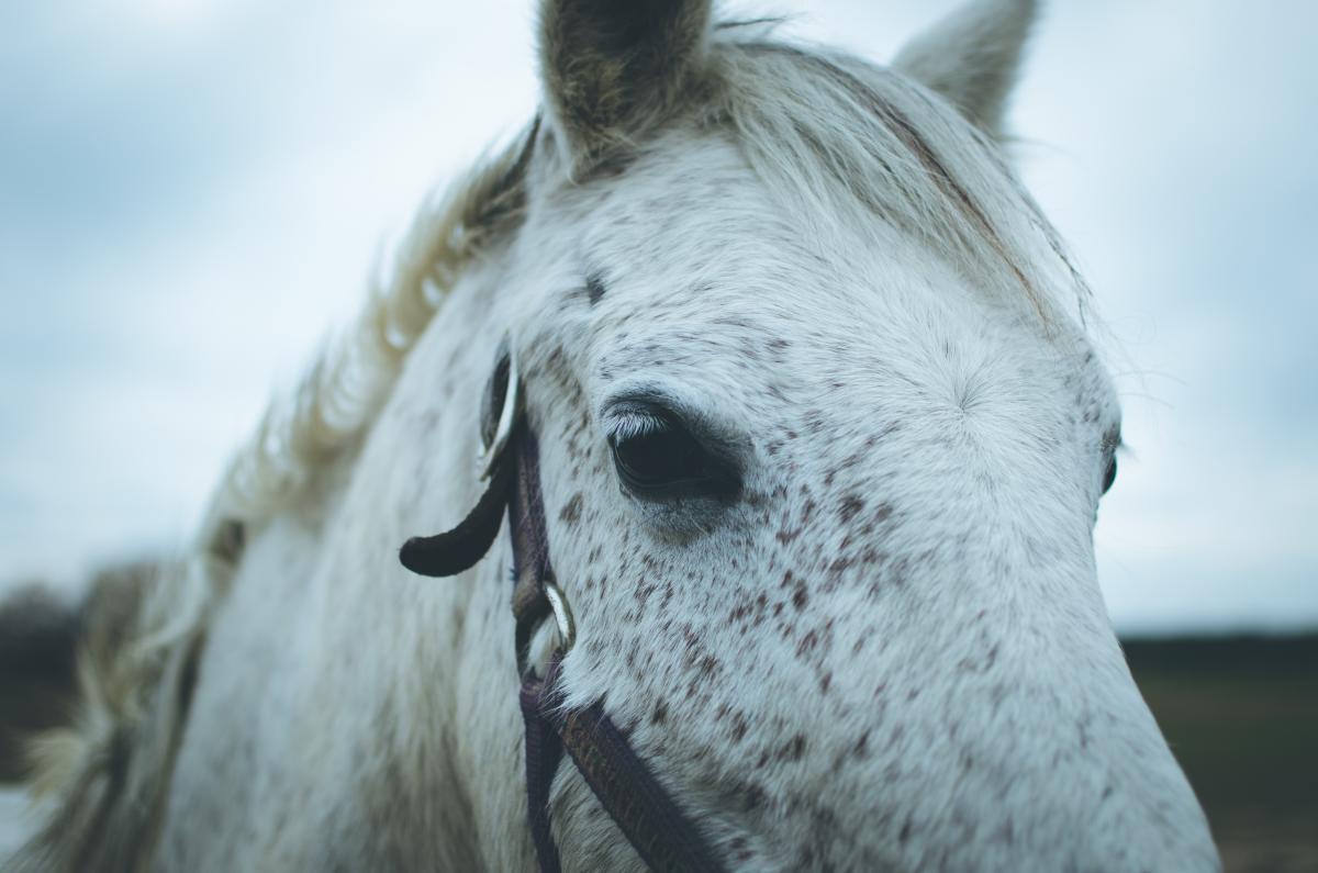 Horse Animal Farm