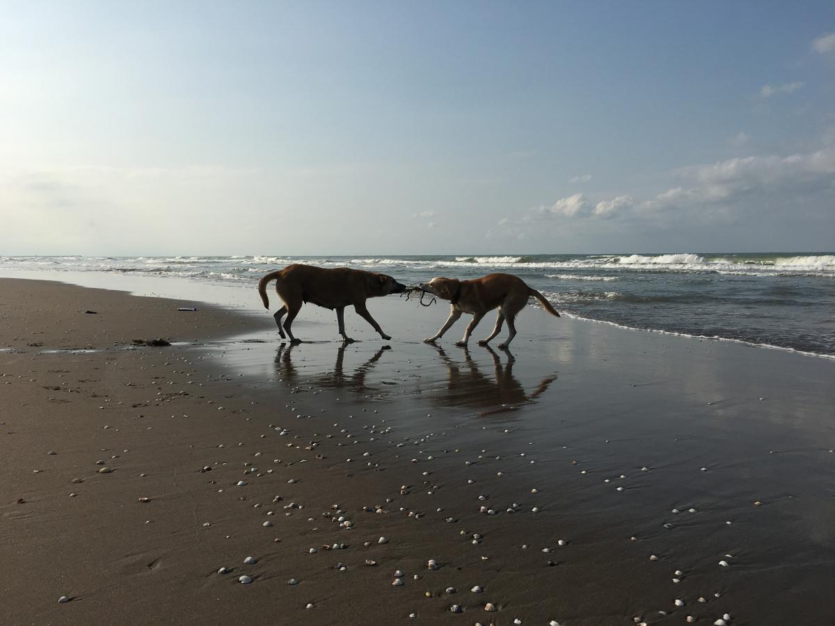 Horse Camel Horses