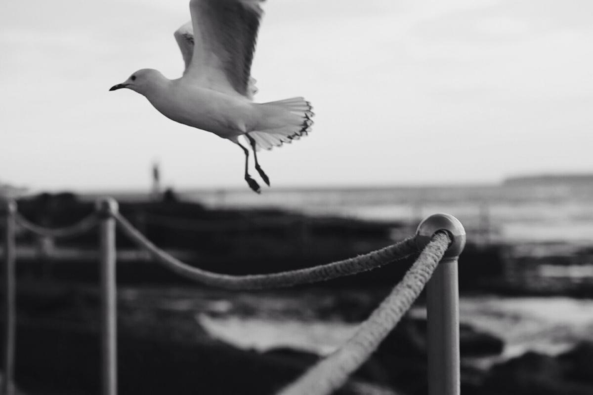 bird wings flying