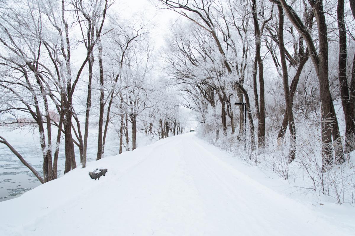 Winter snow cold  #21656