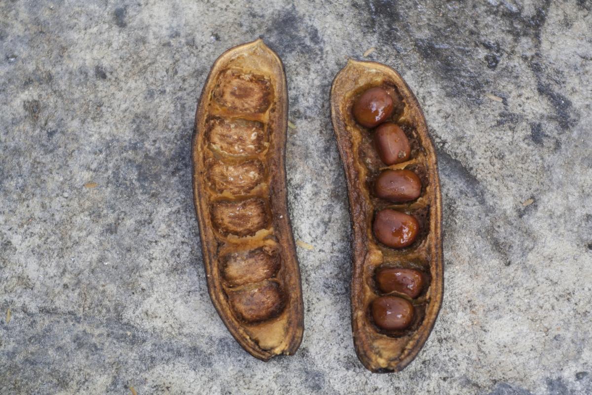 Shell Footwear Mollusk