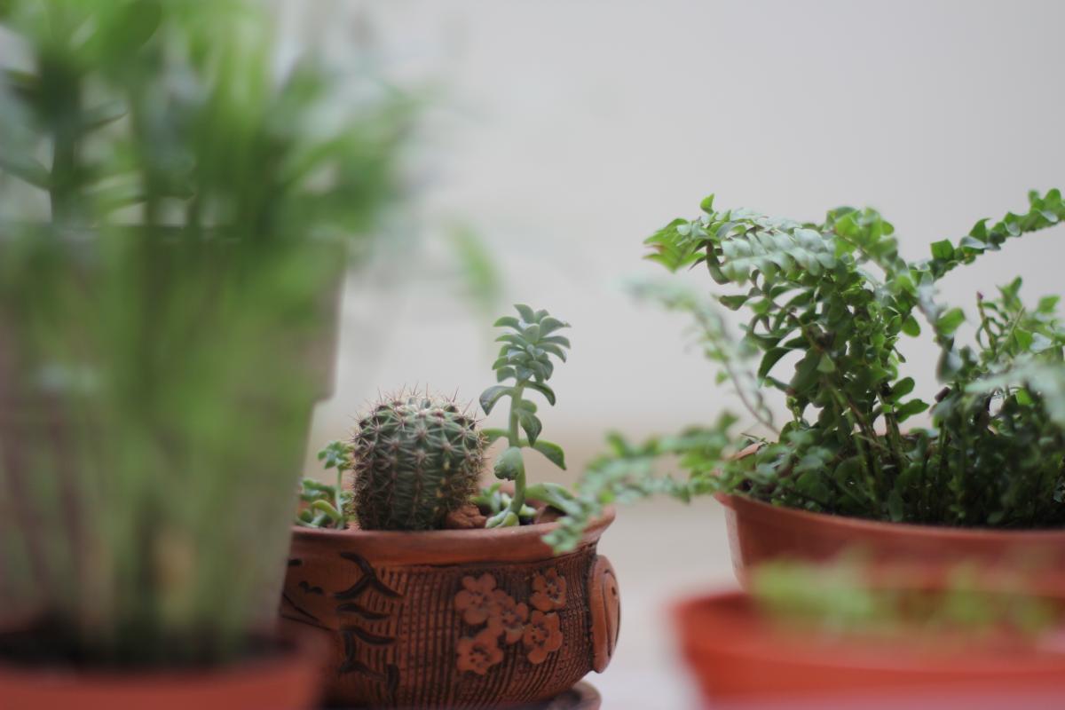 Pot Container Plant