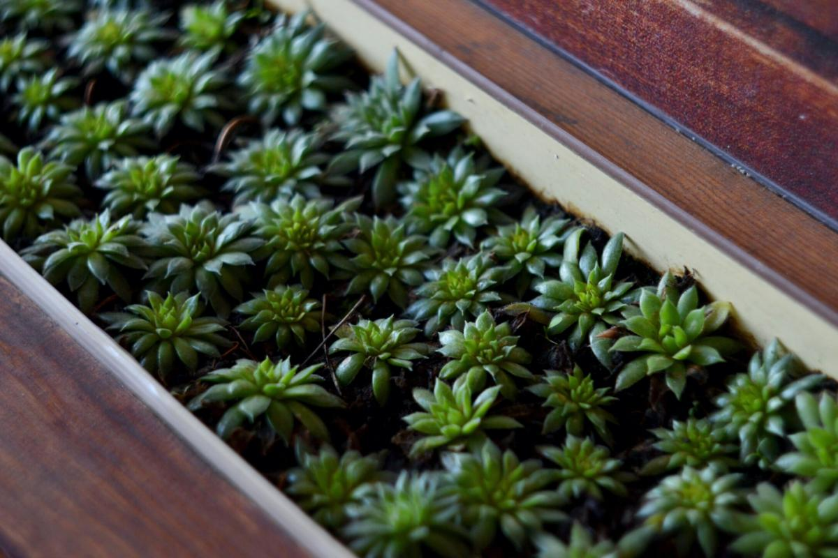Parsley Herb Pot
