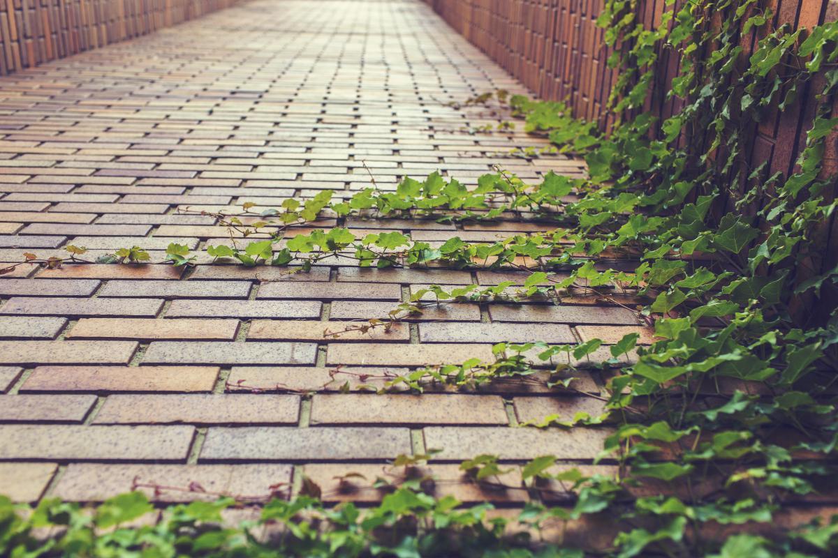 cobblestones vines leaves