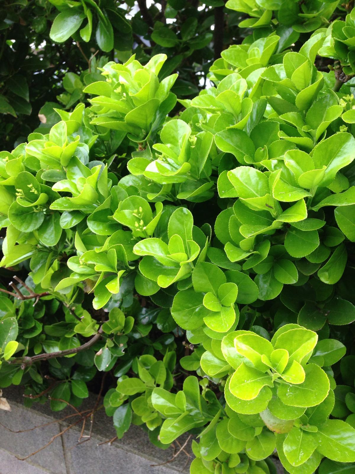 Plant Leaf Herb #221953
