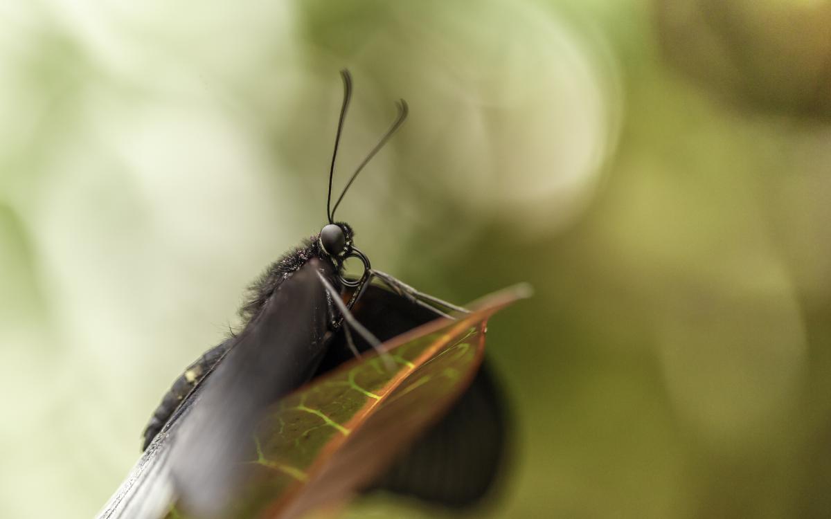 Insect Mantis Arthropod #226475