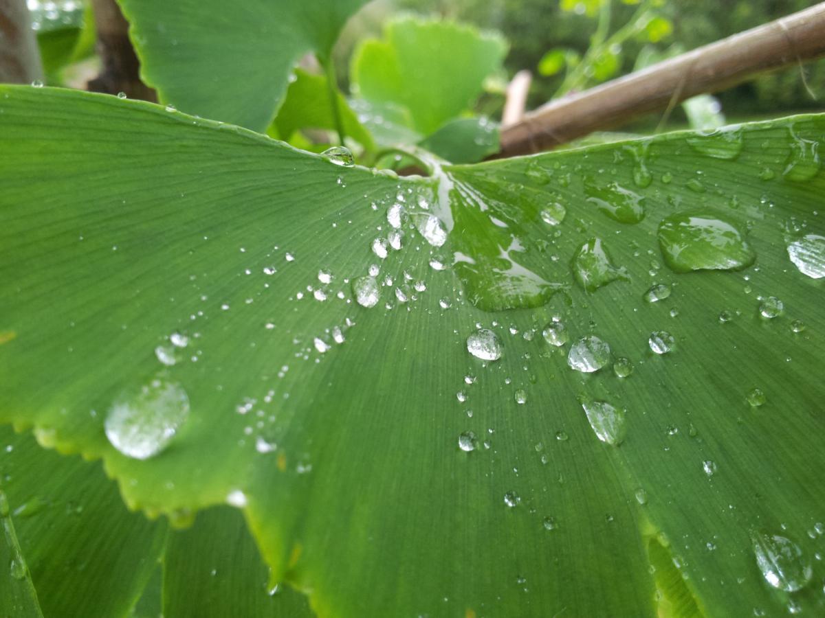 green leaf leaves