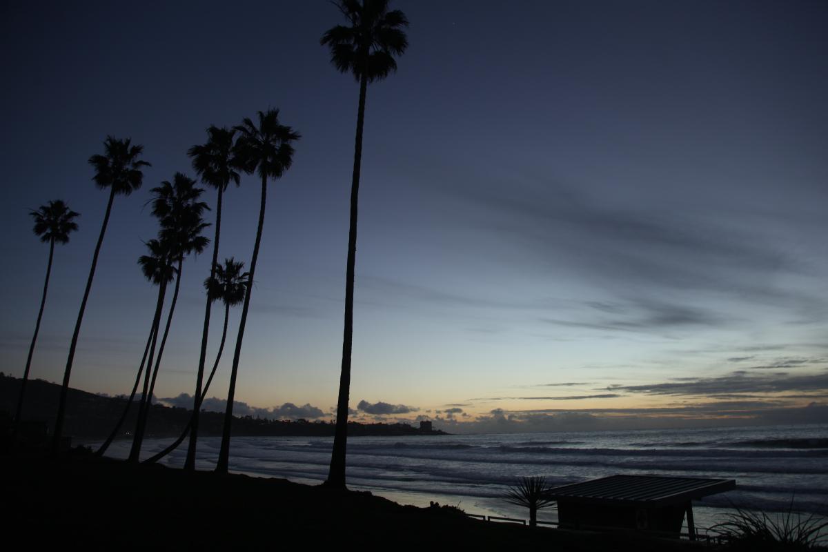 Beach Coconut Ocean #227207