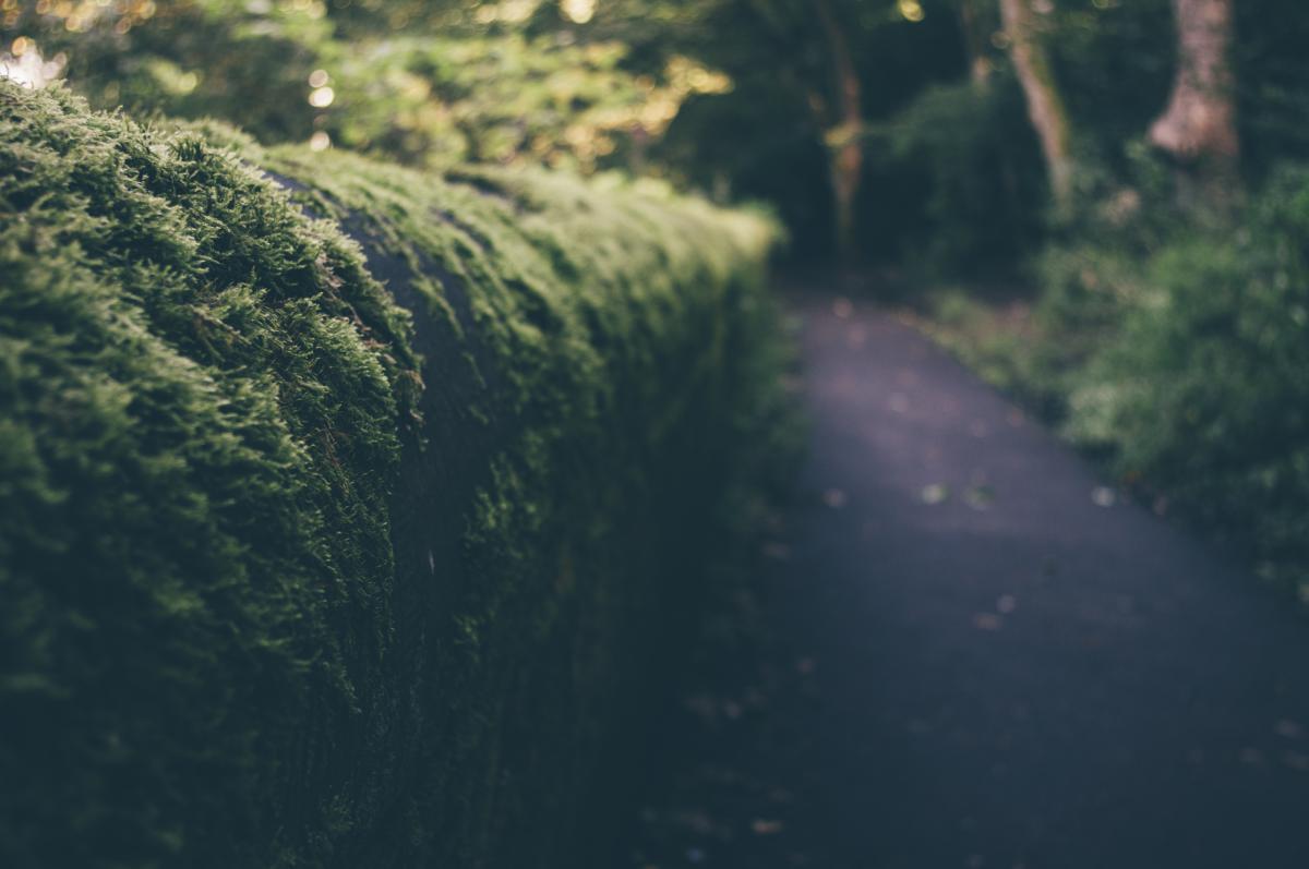 trees shrubs path