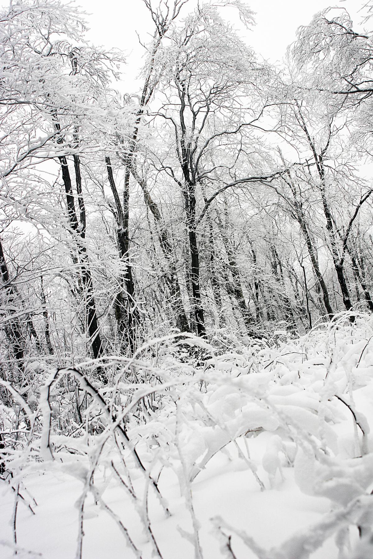 winter snow ice