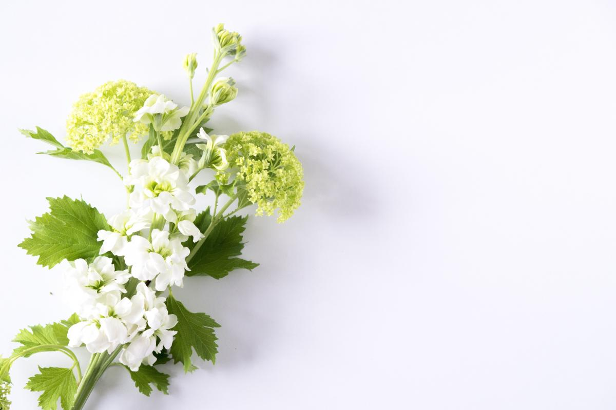 Plant Herb Parsley