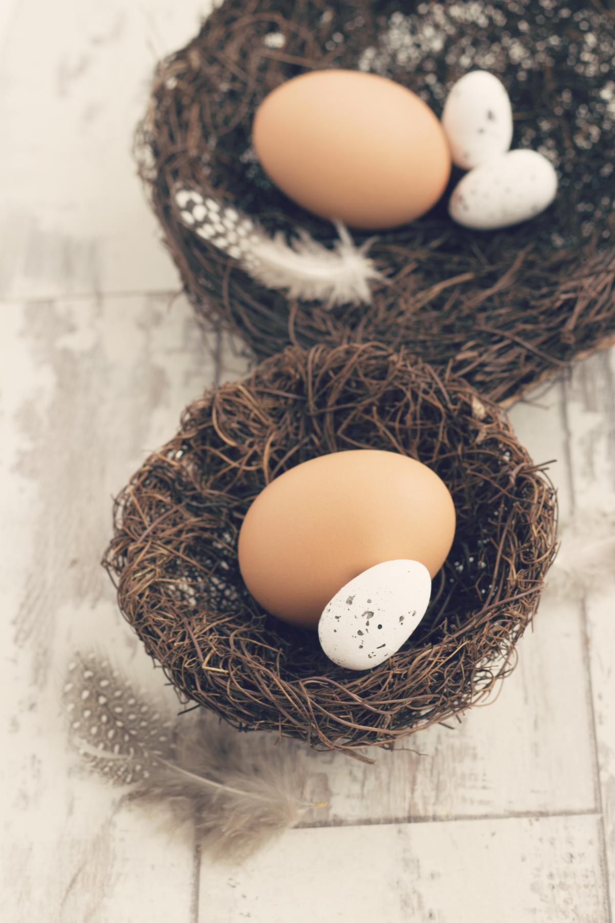 Egg Eggs Nest-egg