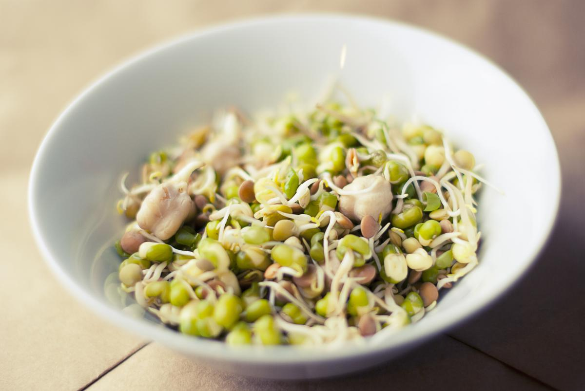 Soybeans sprouts food  #23059