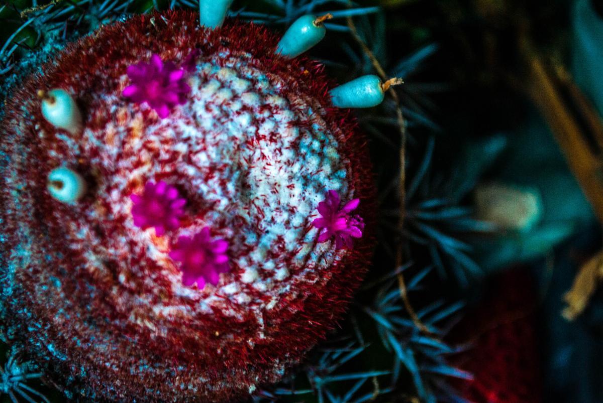 Sea urchin Echinoderm Invertebrate