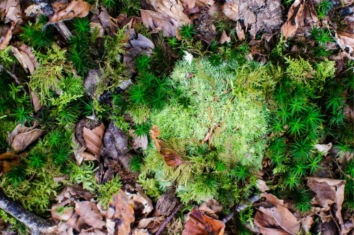 leaves ground sticks