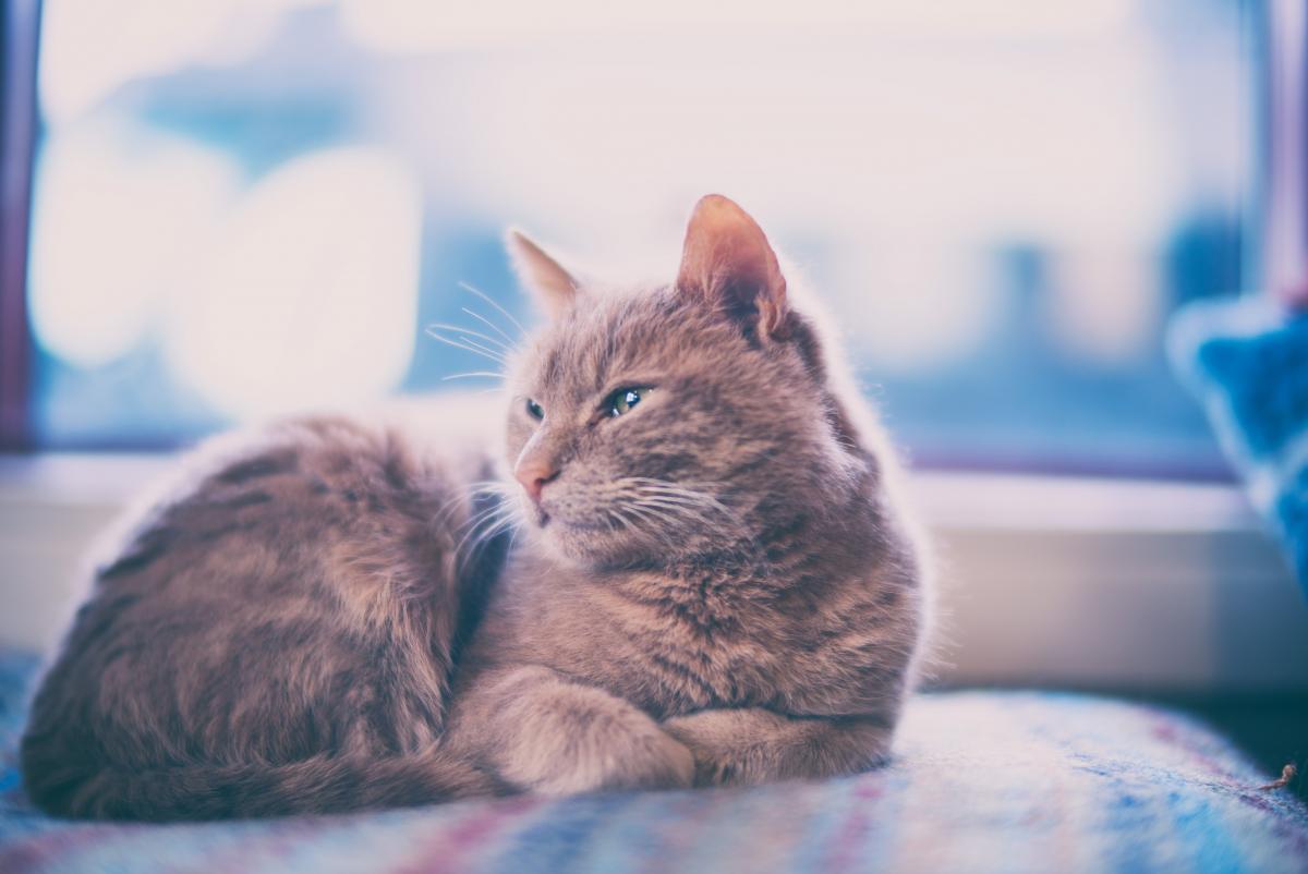Cat Feline Kitten #237138