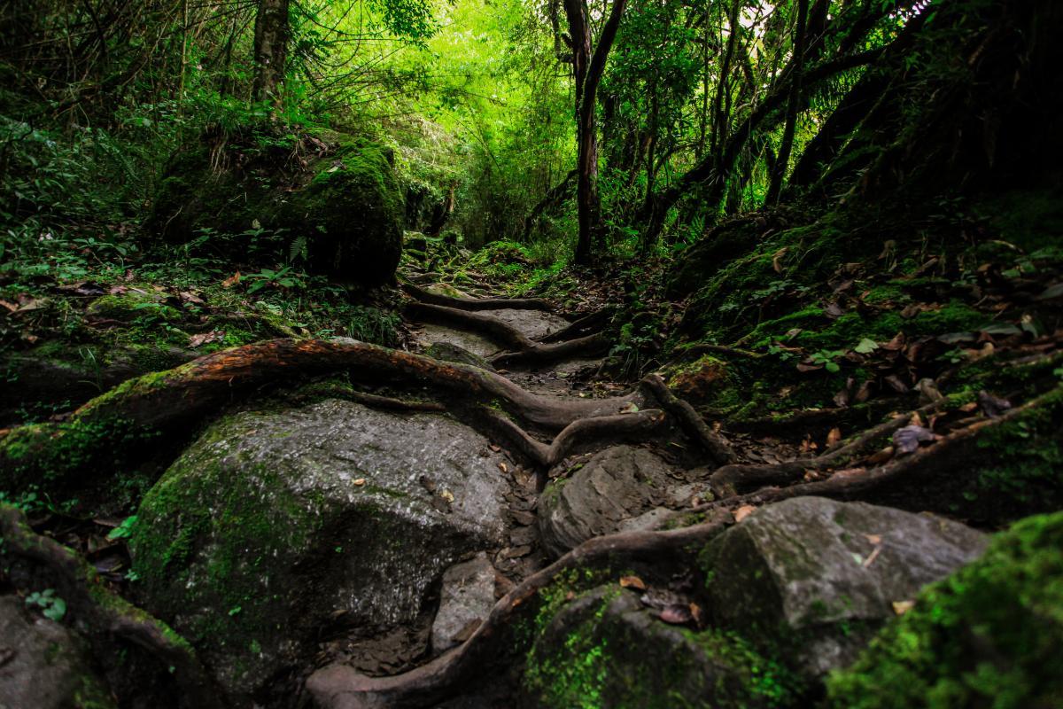 Valle del paisaje rocoso #237974