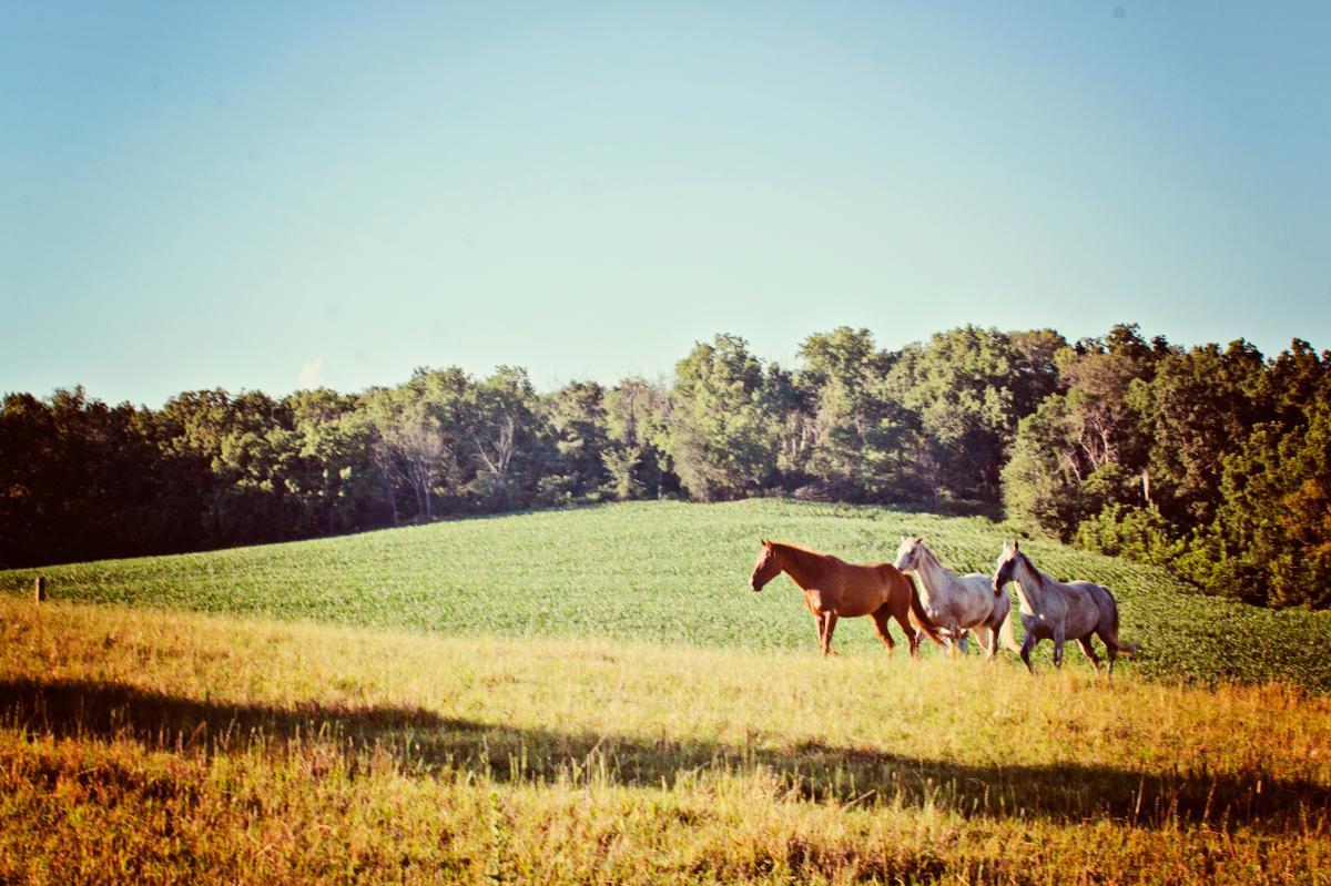 Ranch Grass Horse