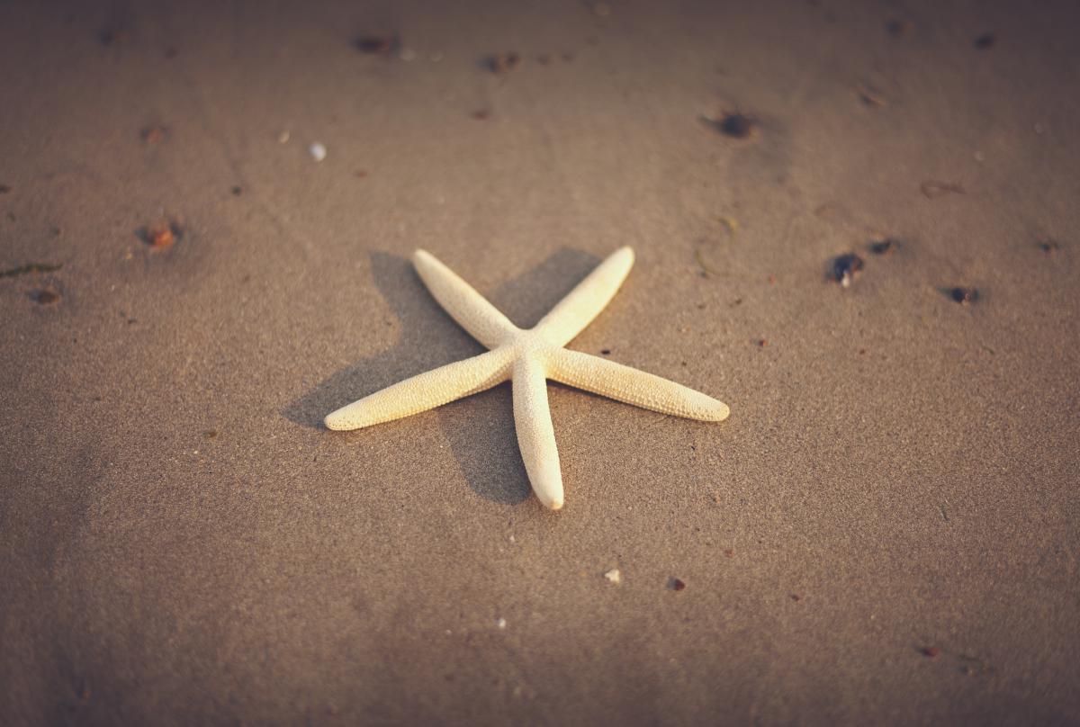 starfish beach sand