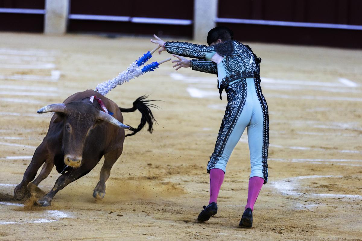 Cowboy Horse Animal