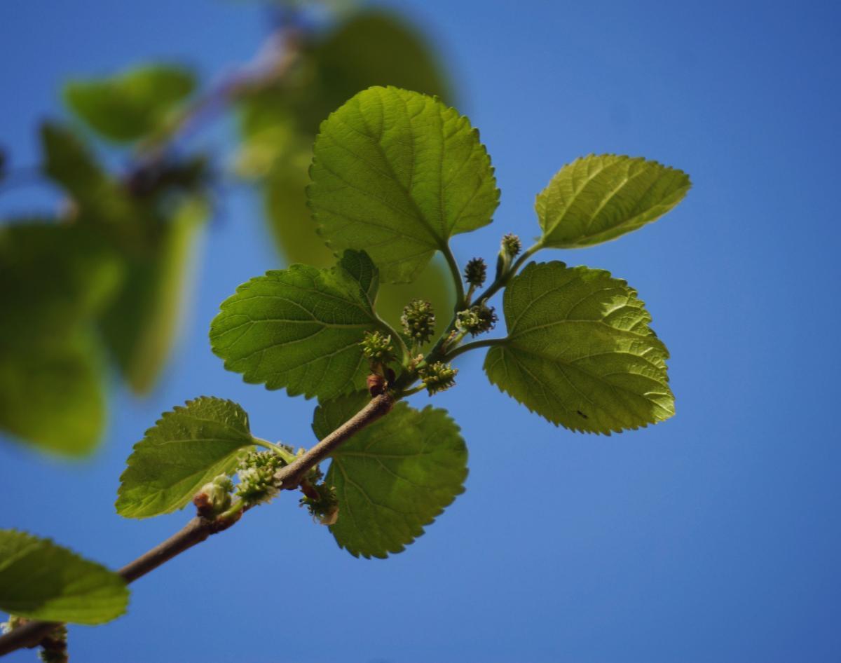 Leaf Plant Branch