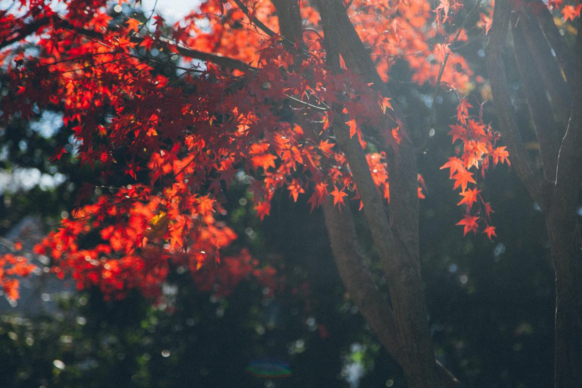 trees branches red