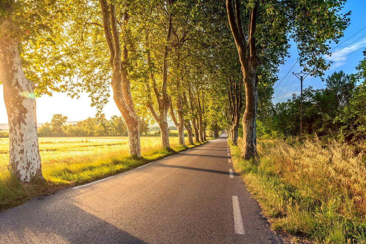 Avenue Asphalt Road