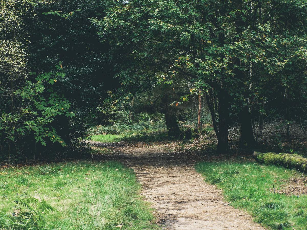 green grass trail