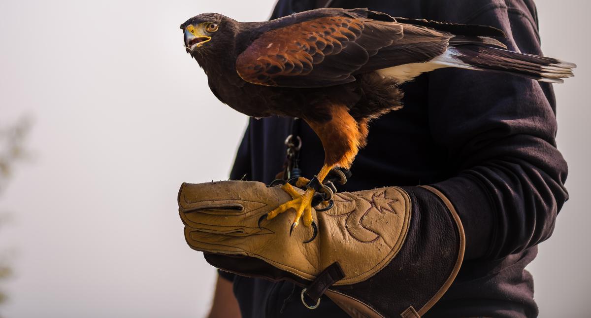 Hunter Bird Wildlife