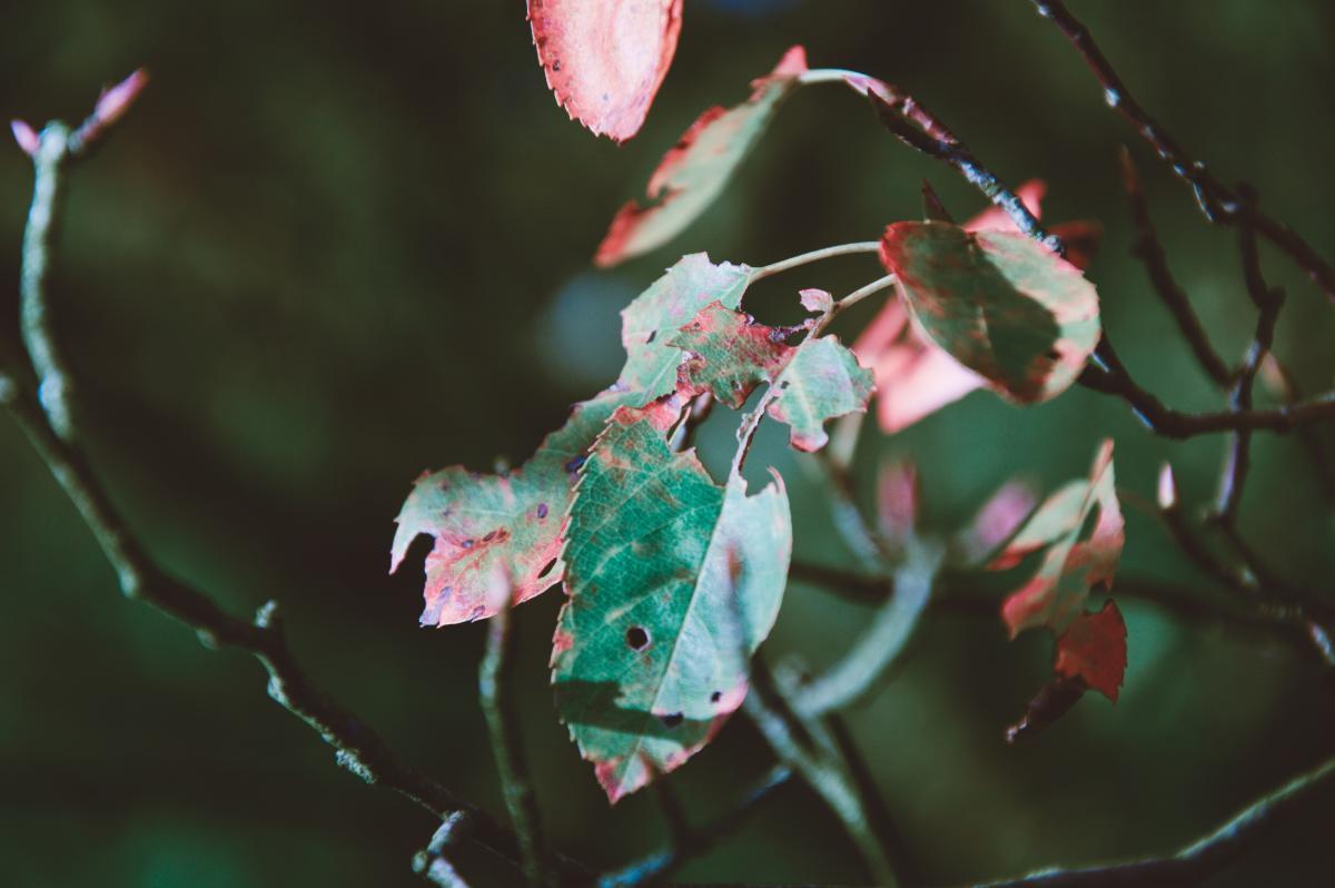 leaves plants trees