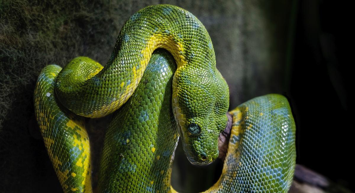 Green snake Snake Reptile