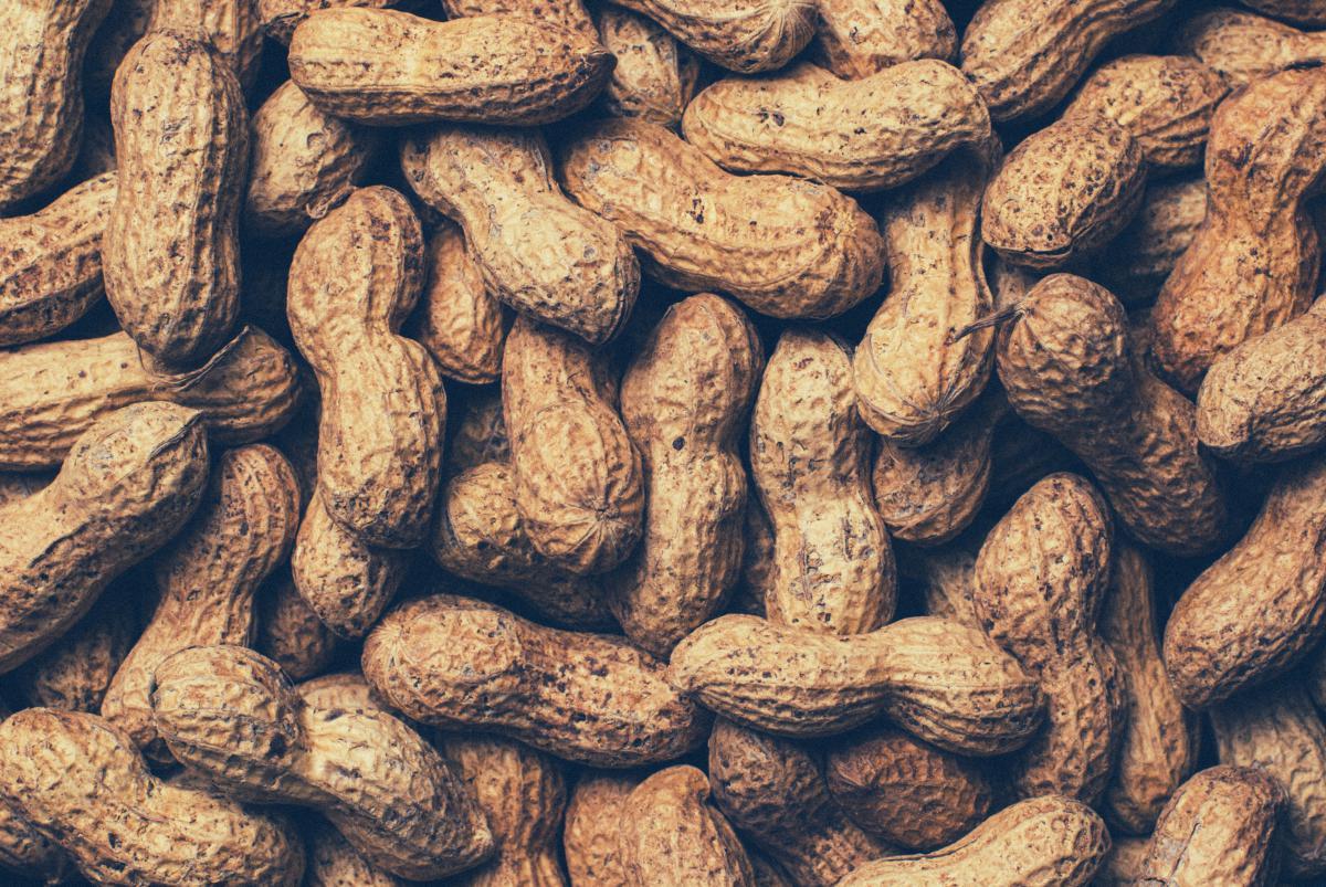 Peanuts food #24847