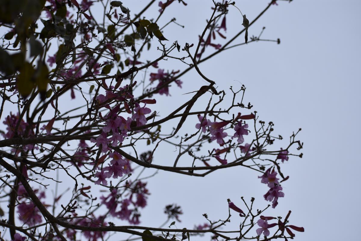 Branchlet Almond Branch #251756