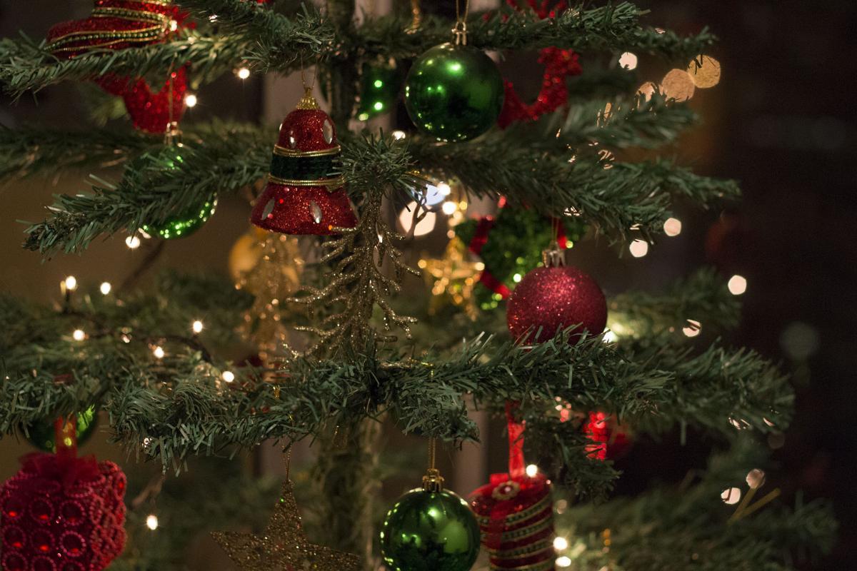 Holly Fir Christmas #253330