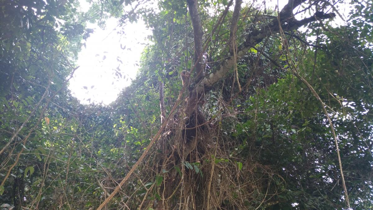 Tree Woody plant Vascular plant #254661
