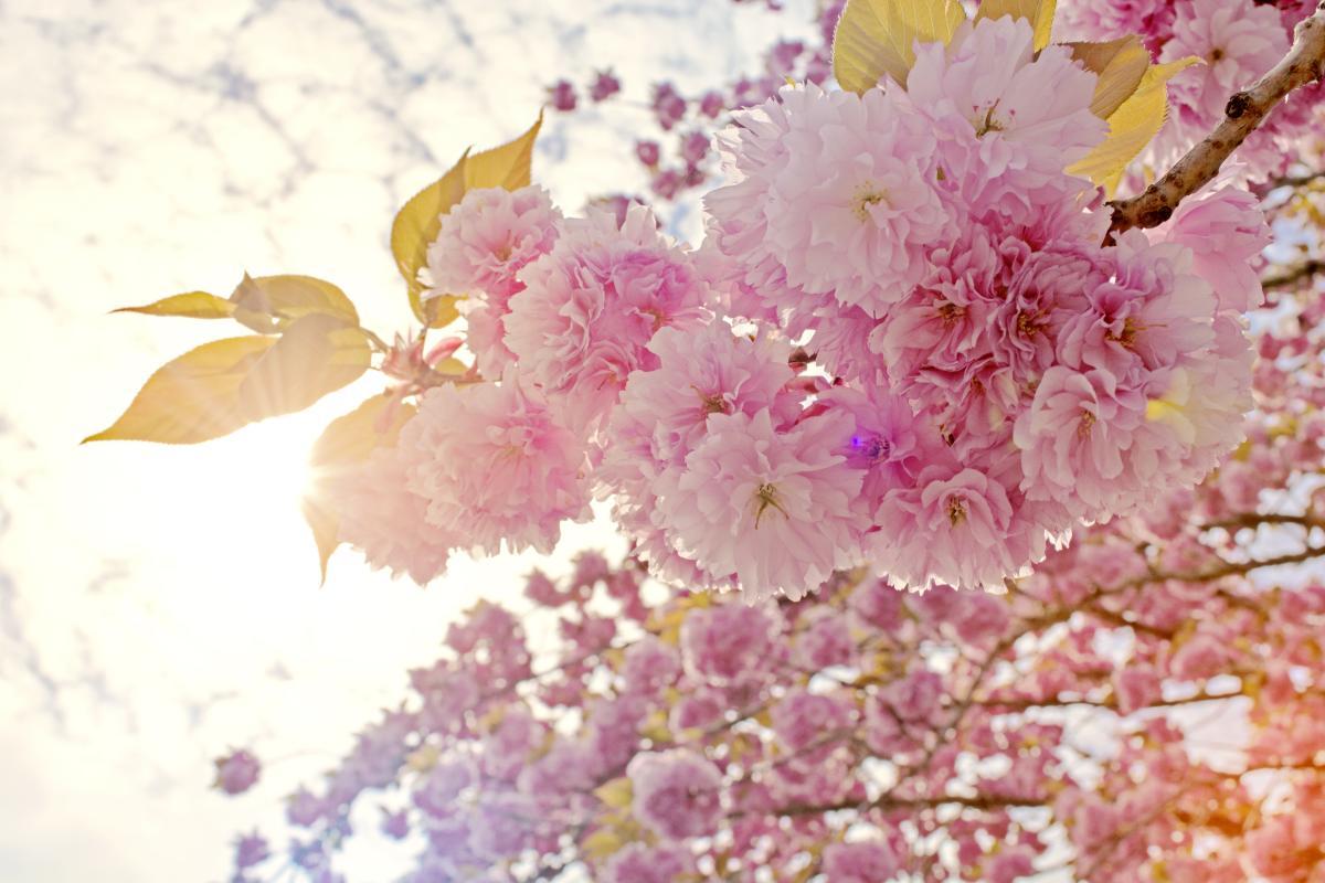 Pink Flower Floral #254770