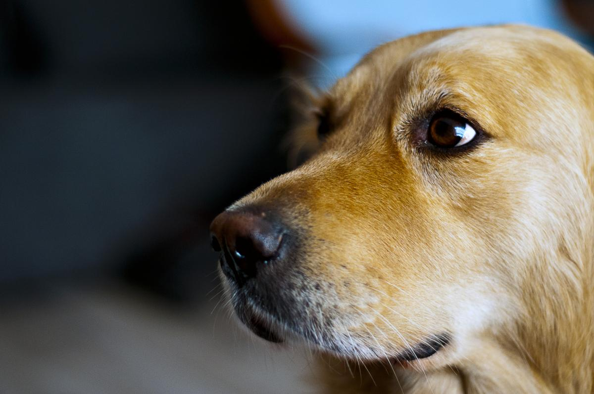 Animal Dog Beagle #25857