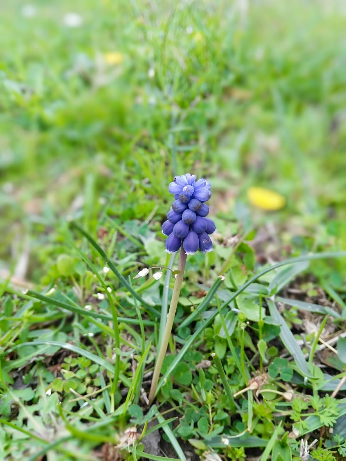 Flower Herb Plant