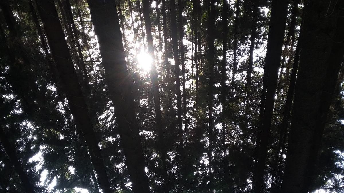 Tree Fir Landscape #259371