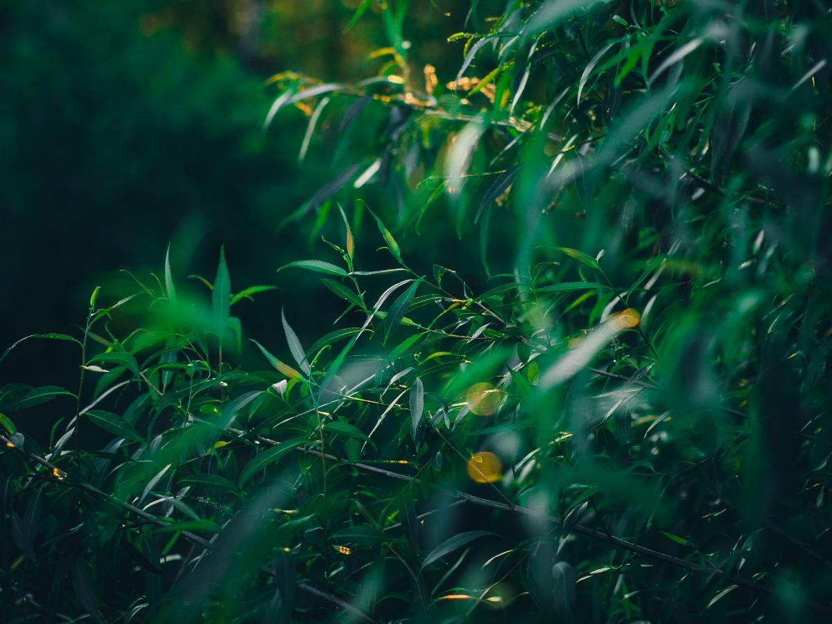 Our private jungle #26707
