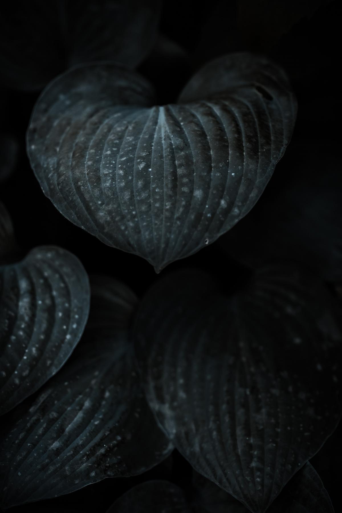 Mollusk Bivalve Invertebrate