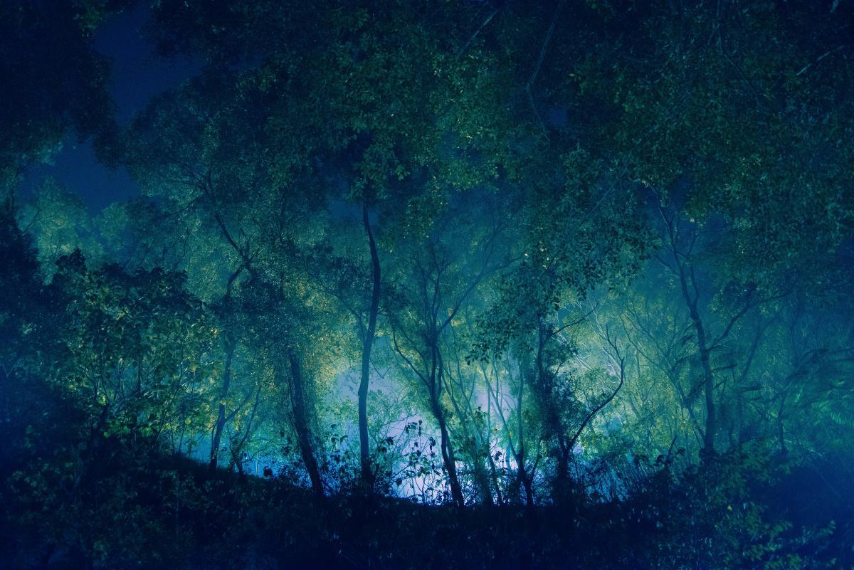 Huge forest #27149