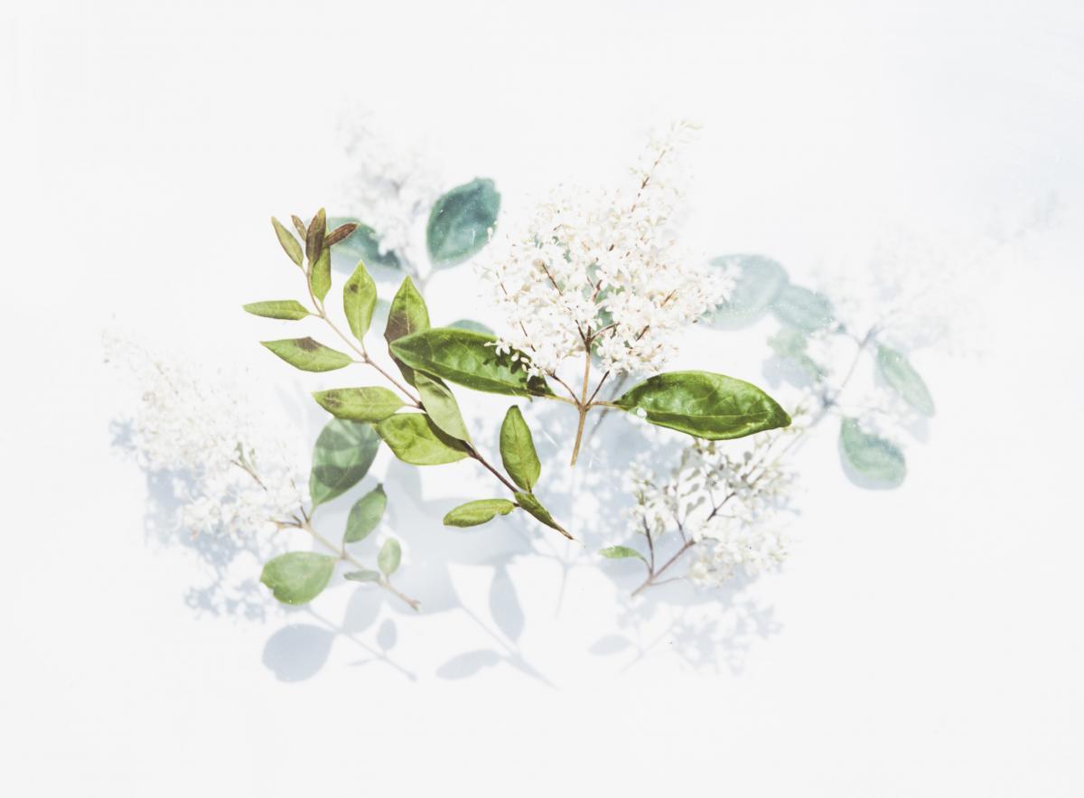 Plant Leaf Bud #272599