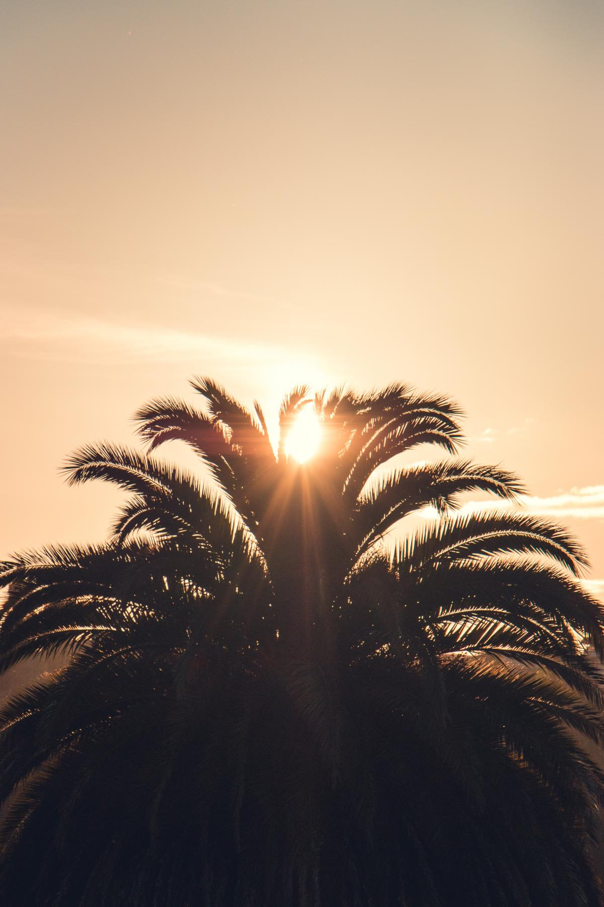 Palm Cactus Tree
