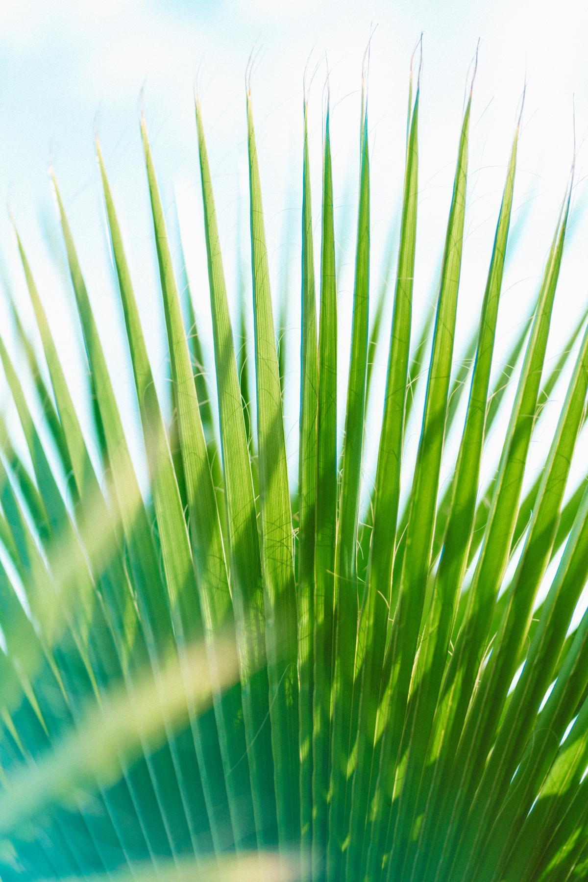 Wheat Grass Spring