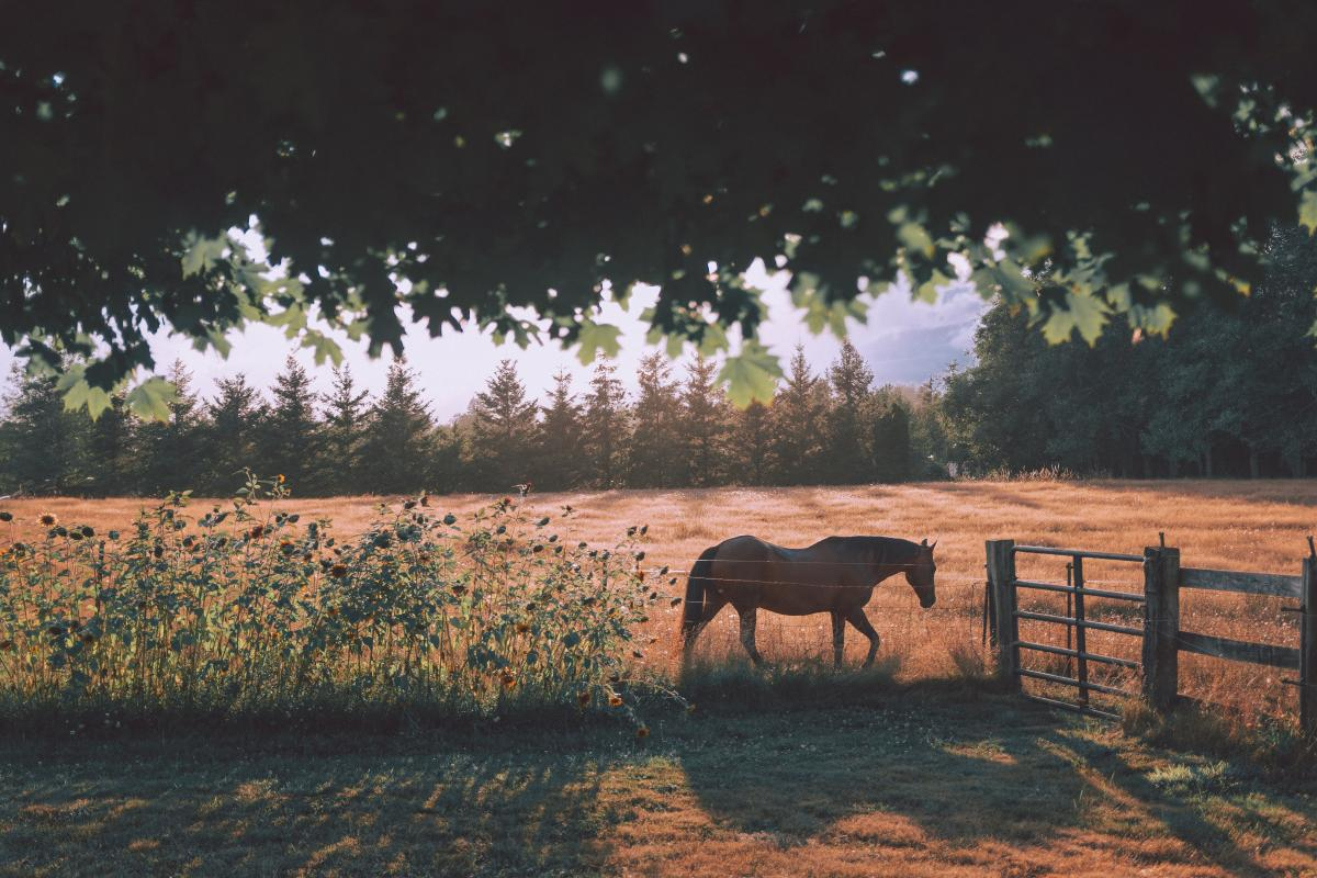 Horse Horses Ranch
