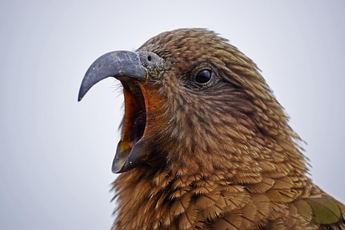 Bird Wildlife Beak