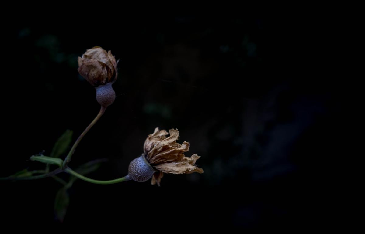 Plant Close Vascular plant