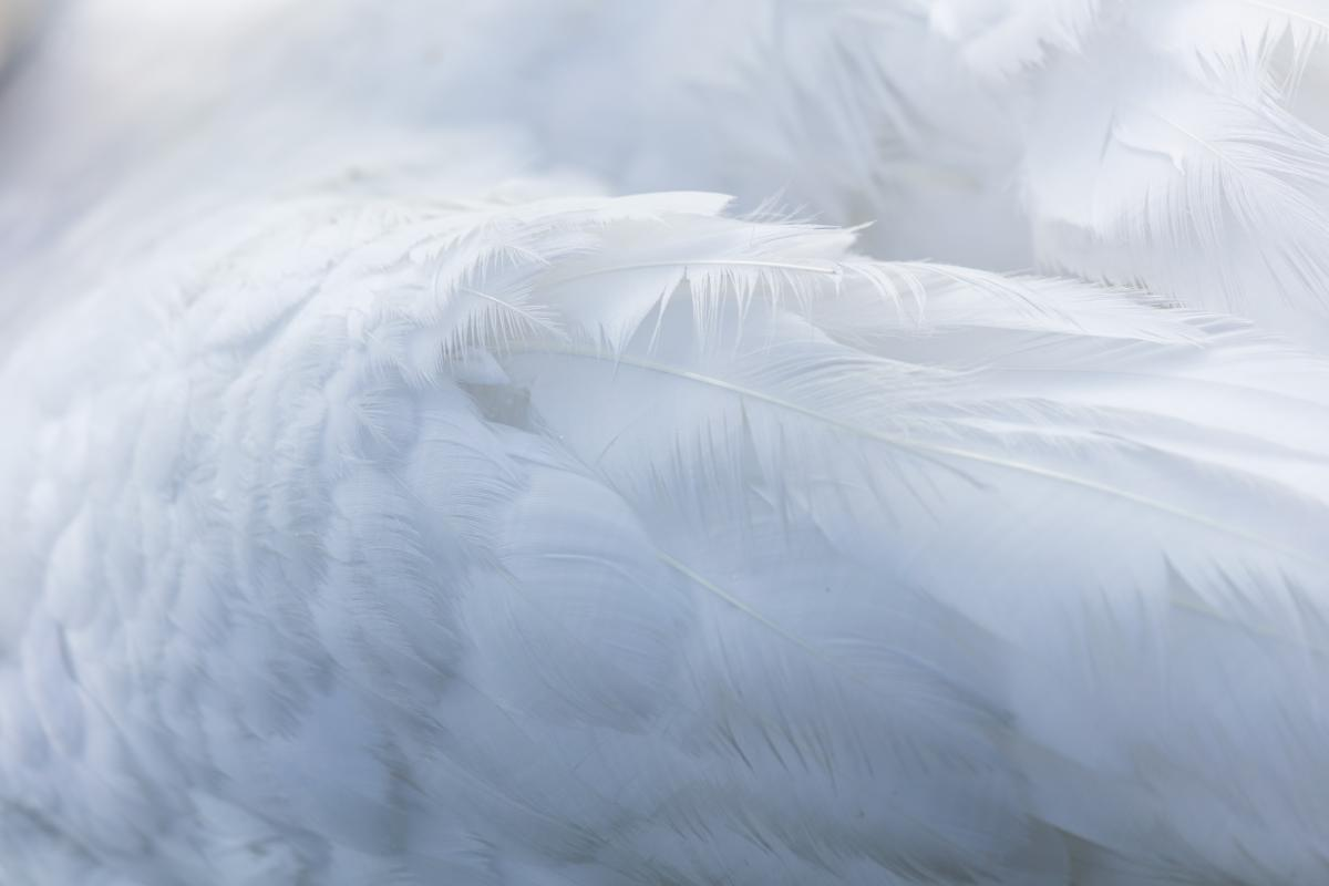 White Texture Fractal