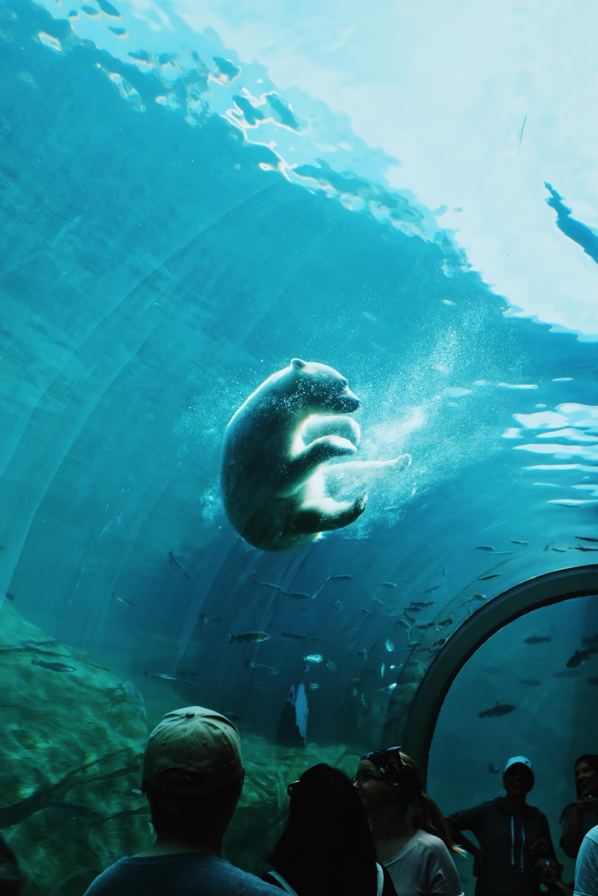 Sea Underwater Ocean